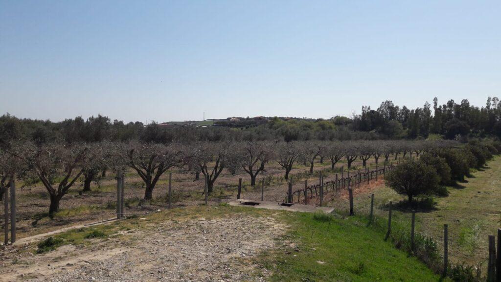 Uliveto Località Cantorato Crotone