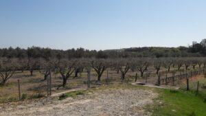 terreni in vendita a Crotone
